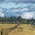 Эвакуированным жителям Новой Зеландии разрешили вернуться домой