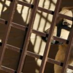 На Ямале ищут хозяина собаки, покусавшей девять человек