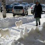 Погода в Воронеже на 14 дней: в городе поселится зима с трескучими морозами