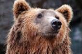 Охотник рассказал об опасности сбежавшего под Мытищами медведя